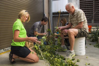 CSU students harvest hops with Doug Odell